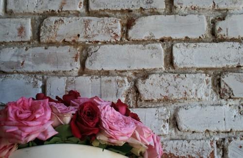 Rosen vor Steinwand