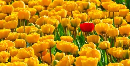 Wohnen mit Gelb
