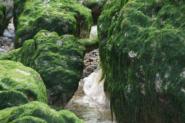 Photo of Algen im Gartenteich bekämpfen – Schonende Methoden