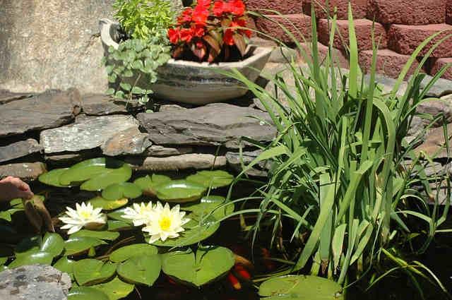 Pflanzen gartenteich rand garten design ideen um ihr for Gartenteich anlegen pflanzen