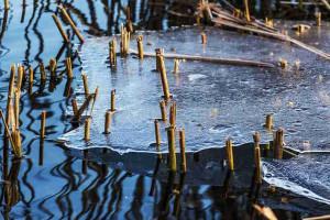 Fischteich aufbau basiswissen for Fische im teich winter