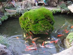 Fischteich rund