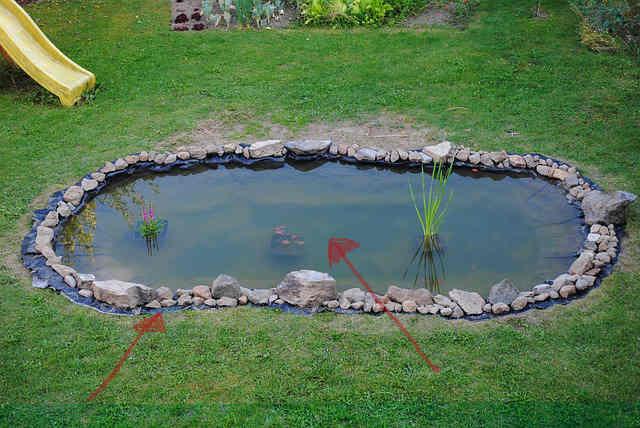 Teich Reinigen: Begutachtung
