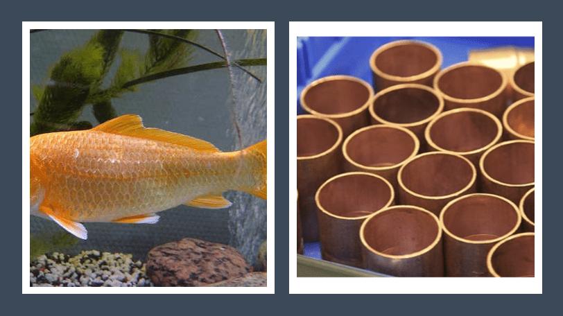 Photo of Kupfer im Gartenteich – Wie schädlich für Teich und Fische?