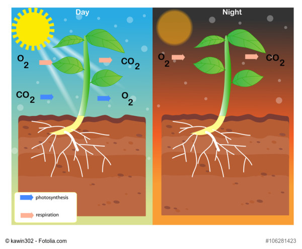 Teichbelüftung: Photosynthese Teichpflanzen Tag und Nacht