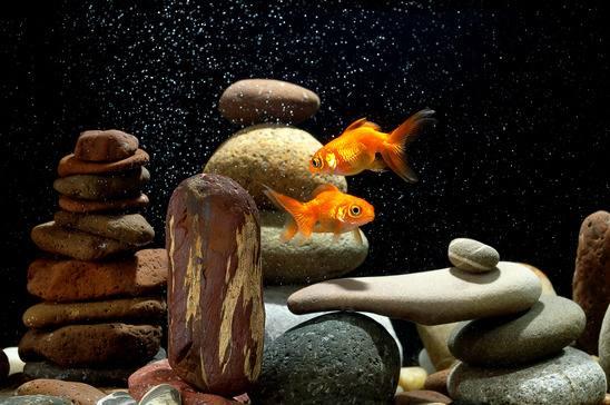 Aquarium Einrichten Puristische Und Phantasievolle Ideen Und