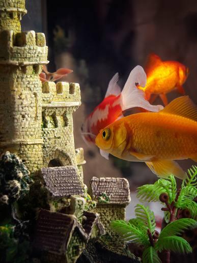 Aquarium Individuell Einrichten: Ideen Und Impressionen. »