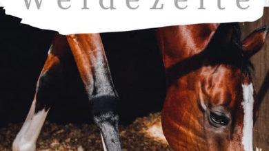 Photo of Weidezelt für Pferde & Schafe – TOP wetterfeste Modelle